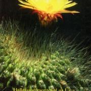 Virágos képeslapok
