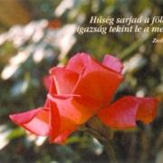 Természetfotós képeslapok
