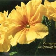 Húsvéti képeslap, borítékos
